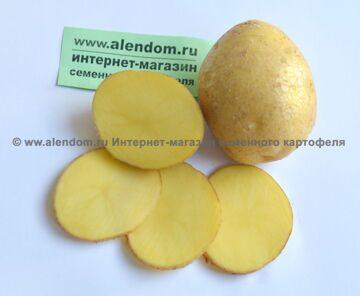 Картофель-Винета--желтая-мякоть-фото-клубня-